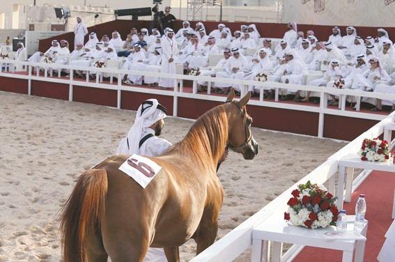 إقبال كبير بمزاد سوق واقف للخيول العربية و يمامة الشقب الأعلى سعرا Horses Arabian Horse Arabians