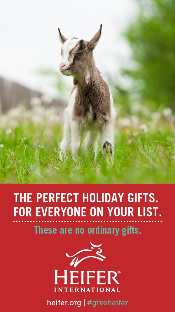 This Holiday Season Shop Heifer Internationals Most Important Gift