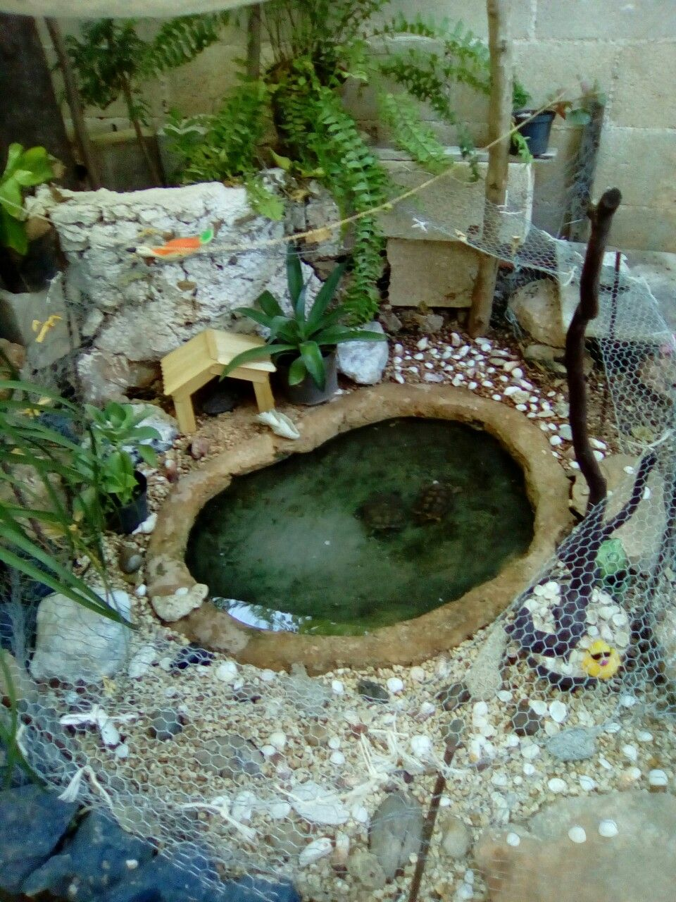 Estanque para tortugas tortugas pinterest estanques for Estanque tortugas