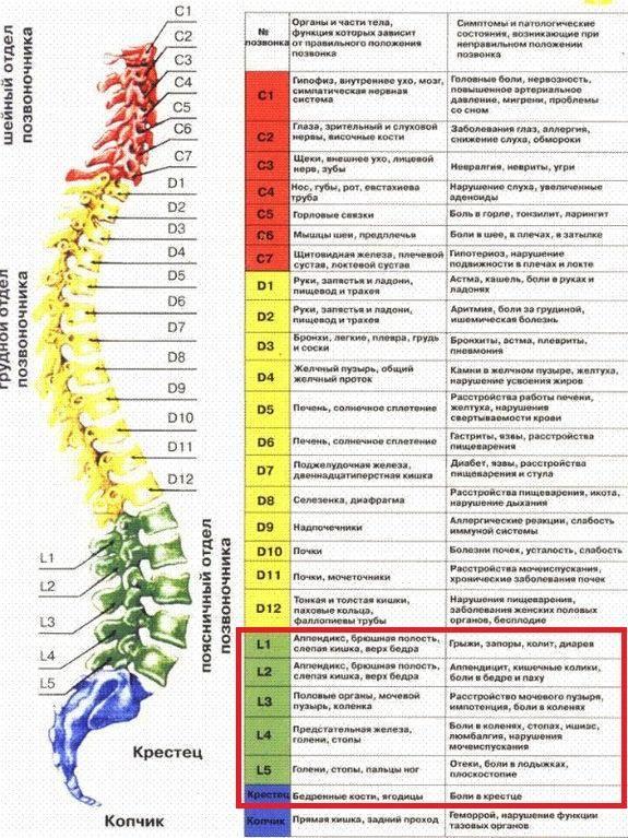 Дорсопатия пояснично-крестцового отдела позвоночника