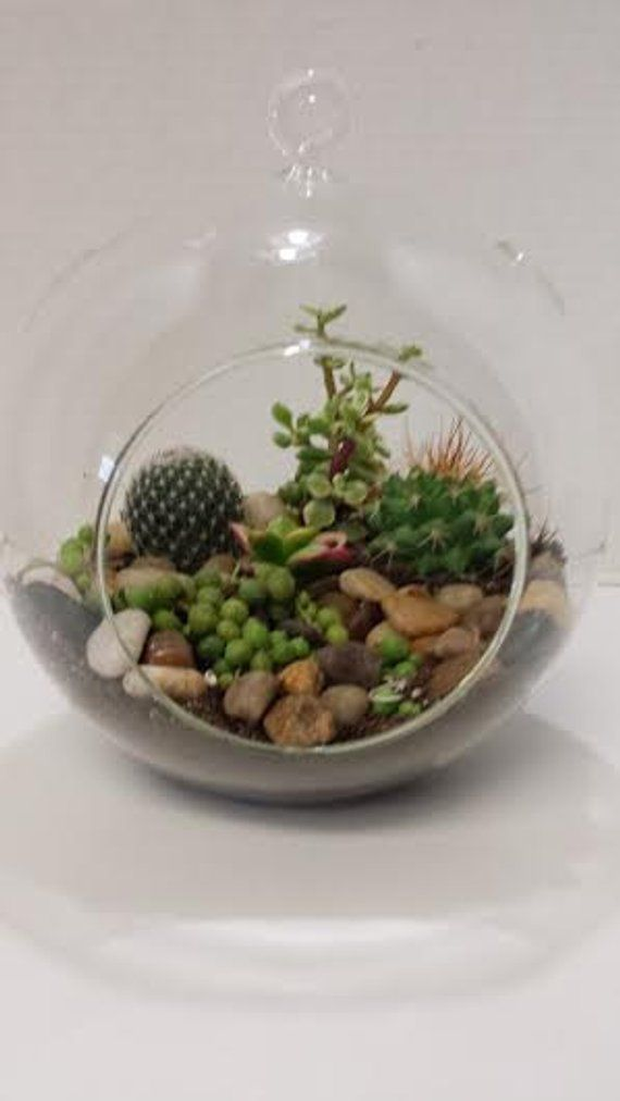 Succulent Plant Glass Globe Terrarium Diy Complete Kit With 2 Small