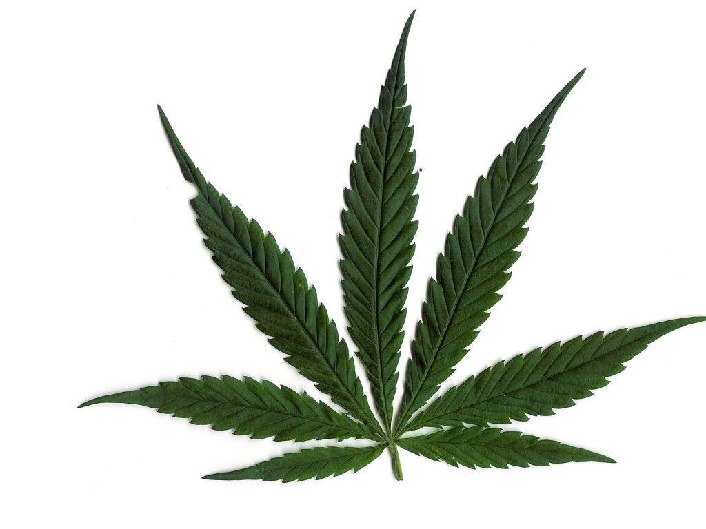 Marihuana Dibujo Para Colorear