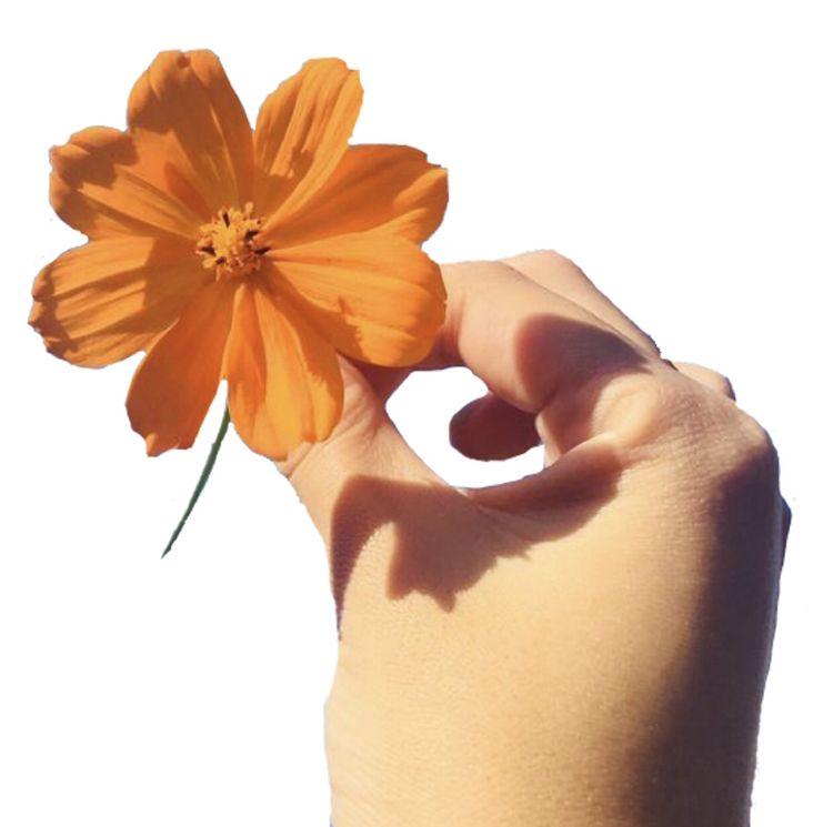 Orange Flower Png Aesthetic Images Pretty Flowers Instagram