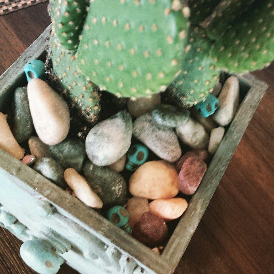 #cactus #skulls