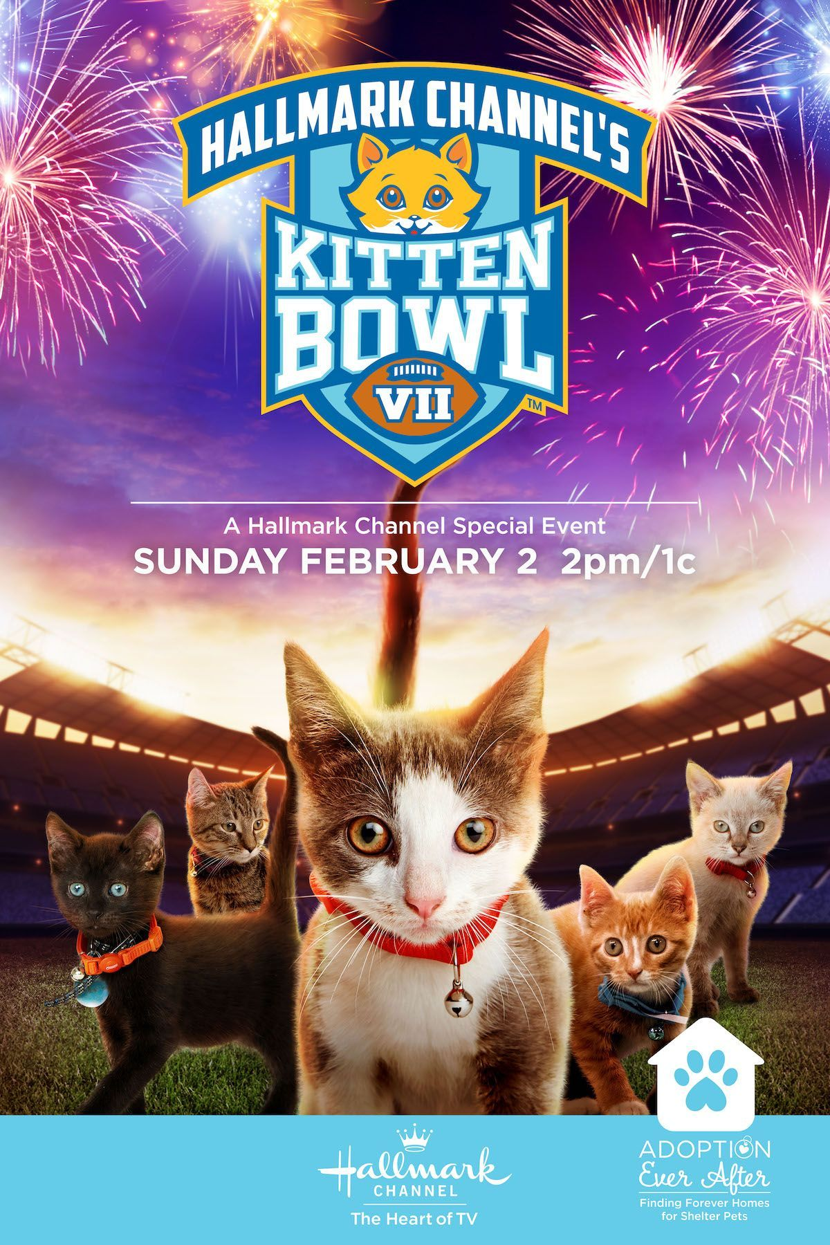 The Kittens Are Ready For Their Closeup In Hallmark Channel S Kitten Bowl Vii Don T Miss The Felin In 2020 Kitten Bowls Christmas Movies On Tv Family Christmas Movies