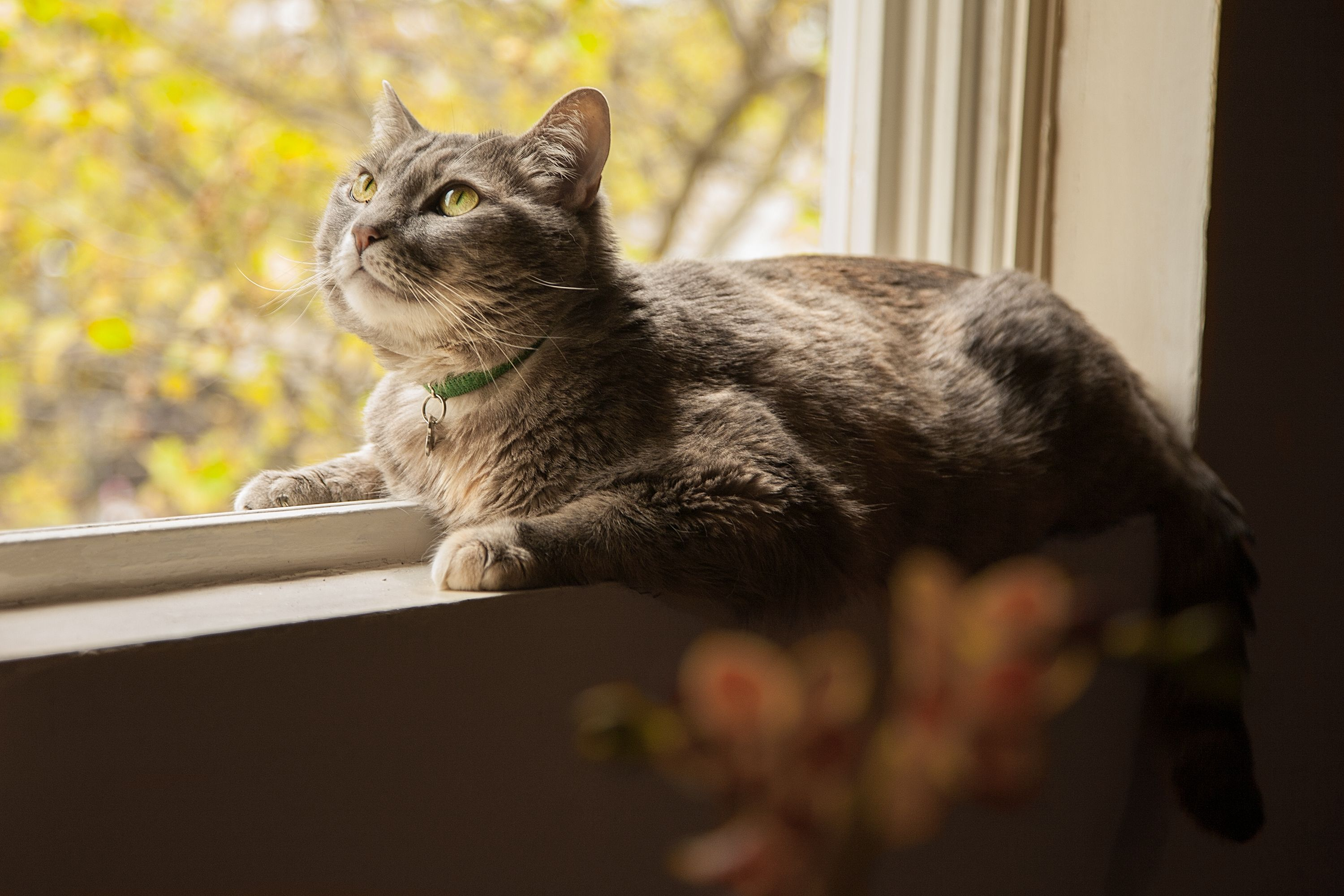 How To Keep An Indoor Cat From Being Bored Cuteness Com Cats