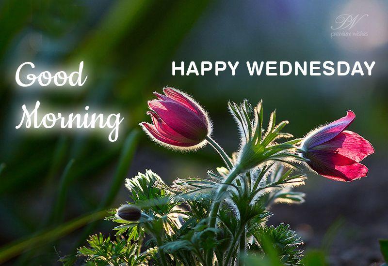 Good Morning Happy Wednesday Good Morning Happy Good Morning Wednesday Good Morning