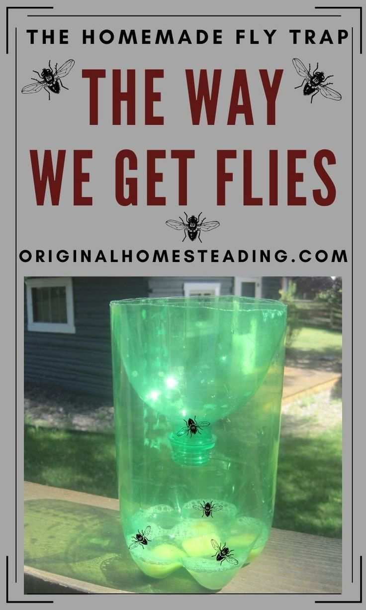 Simple Homemade Fly Trap in 2020 Homemade fly traps