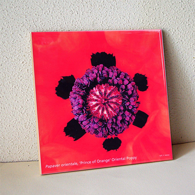 Decorative Tiles For Sale On Sale Oriental Poppy Ceramic Tile Orange Floral Trivet