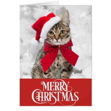 Pet Cat Dog Christmas Card Zazzle Com Dog Christmas Card Christmas Dog Pets Cats