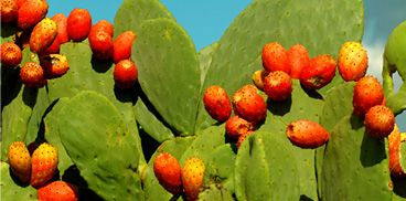Fichi d'India - The taste is soooo sweet, but pay attention to the bones, you should peel them first with gum gloves!