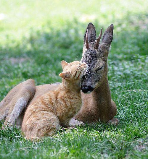 ภาพแมวน าร กๆ Unlikely Animal Friends Animals Friendship Cute Animals