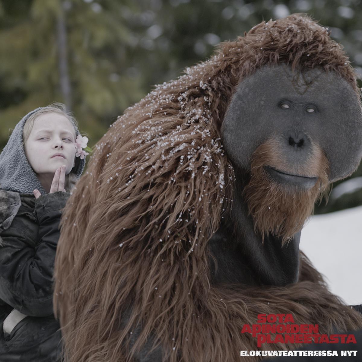 Me suojelemme toisiamme   SOTA APINOIDEN PLANEETASTA nyt elokuvateattereissa          @nordiskfilmfinland