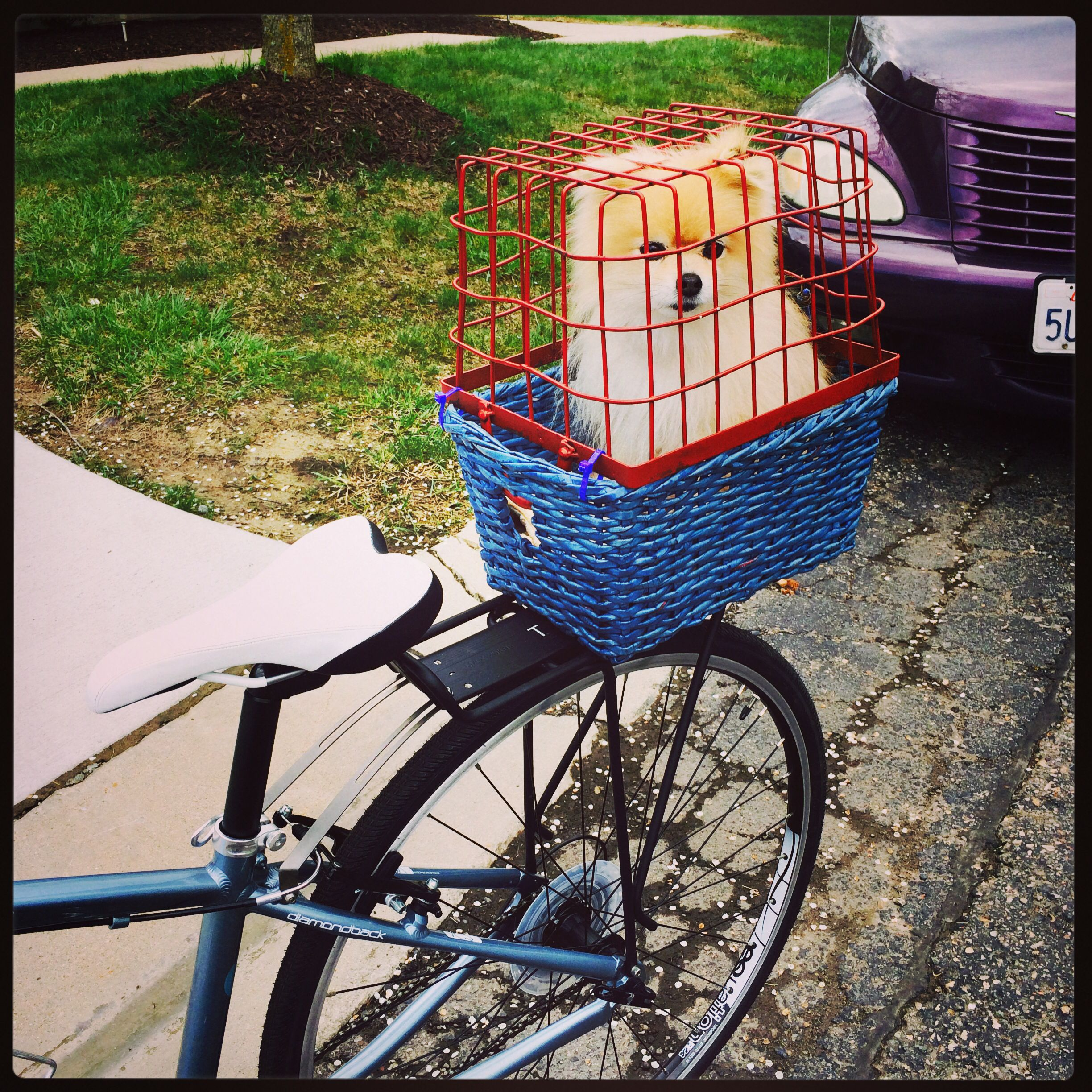 Dog Bicycle Seat Basket Crate Made Our Own Dog Bike Seat
