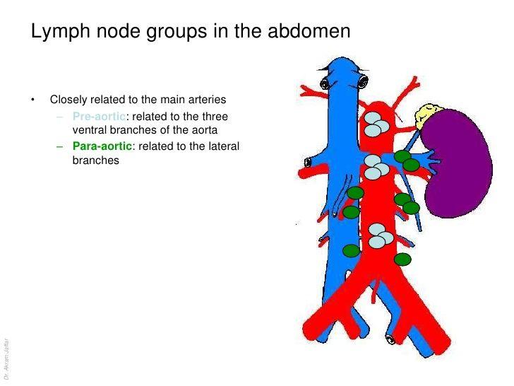 retroperitoneal lymph nodes lymphoma retroperitoneal lymph nodes ccuart Gallery
