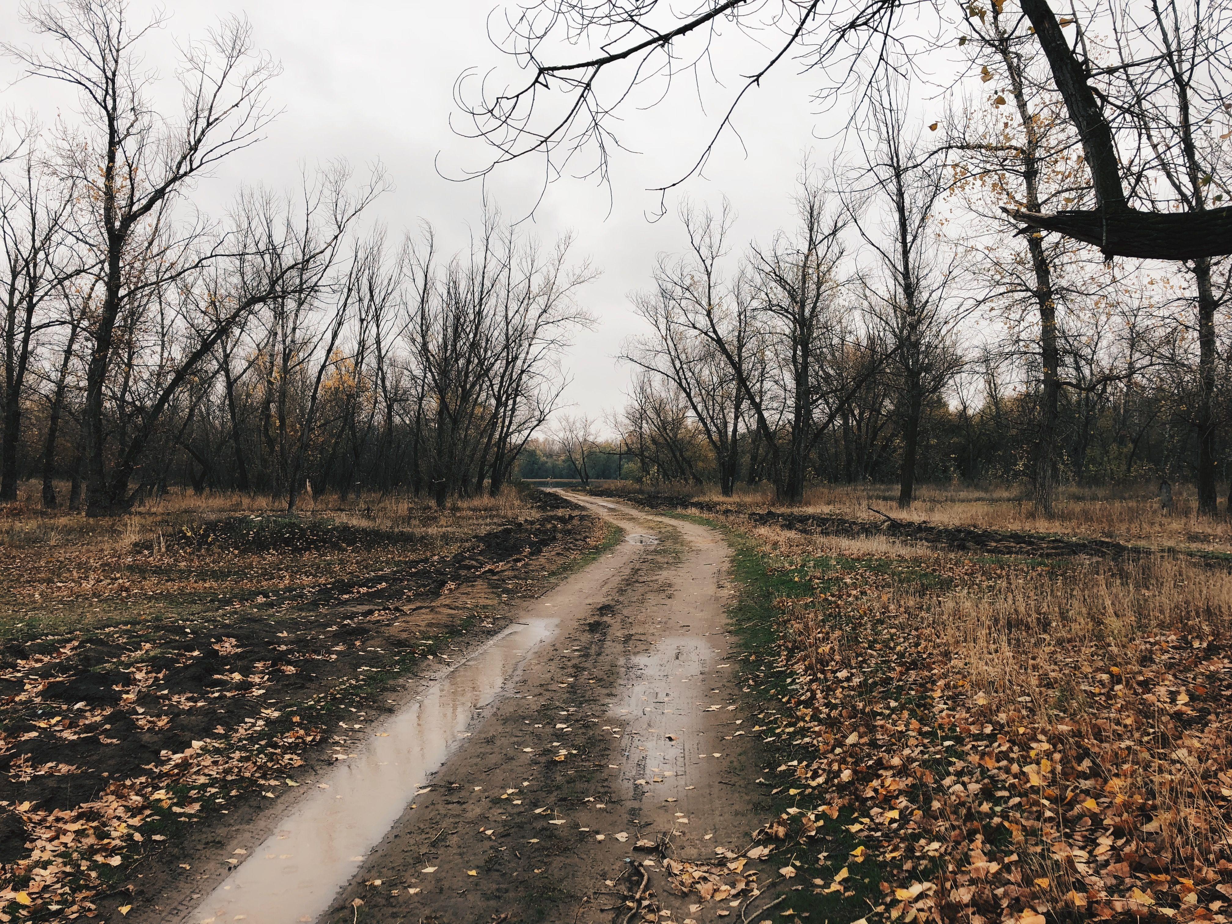 Поздняя осень в лесу. Мрачный лес   Лес, В лес