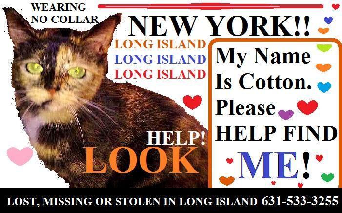 Pls Share Missing Cat Cotton In Long Island Area Reward Losing A Pet Team Hope Pet Finder