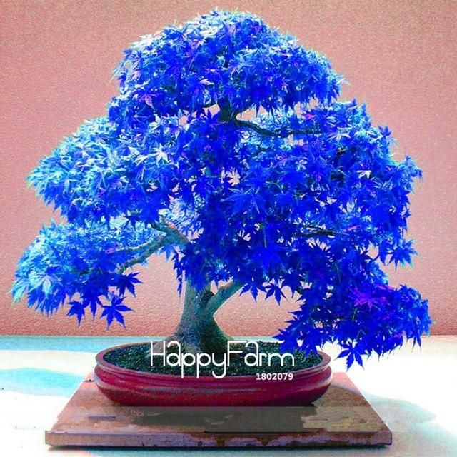 Miniature Gift Bag Bonsai