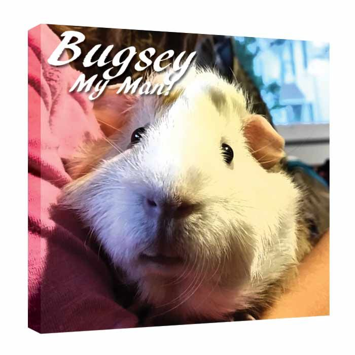 Pig Lovers And Pets Lovers Pet Photo Printed On Canvas Without Words Pet Lover Gift Love Our Fur Babies Dog Cats Guinea Pigs We Love Our Pets