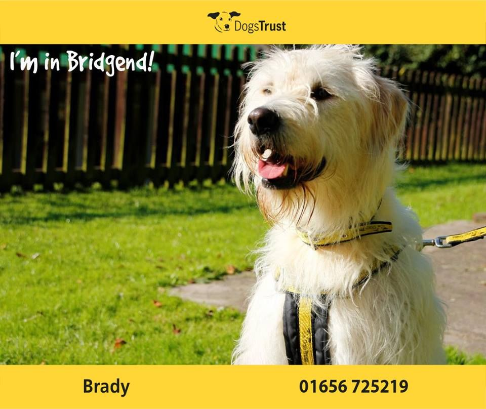 Brady At Dogs Trust Bridgend Is 3 Years Old She Is An Active Girl