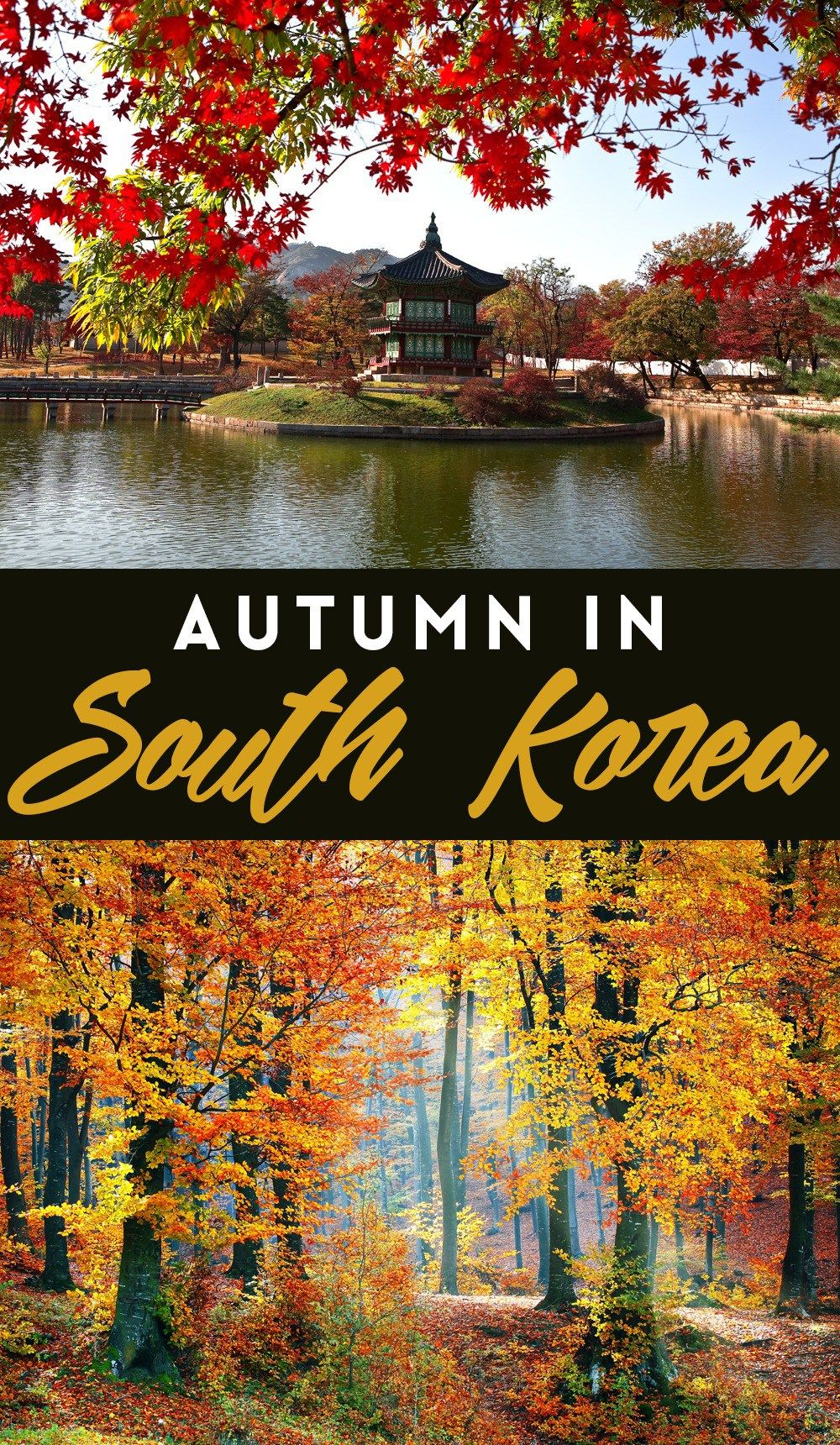 Autumn In South Korea The Country S Best Spots For Fall In One Amazing Road Trip Korea Travel South Korea Travel Asia Travel