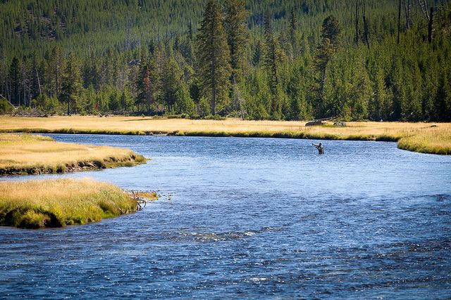 Fly Fishing In The Yellowstone River Yellowstone River Fly Fishing Yellowstone