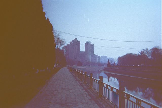 Wild China Disposable Camera by Nicole Irene