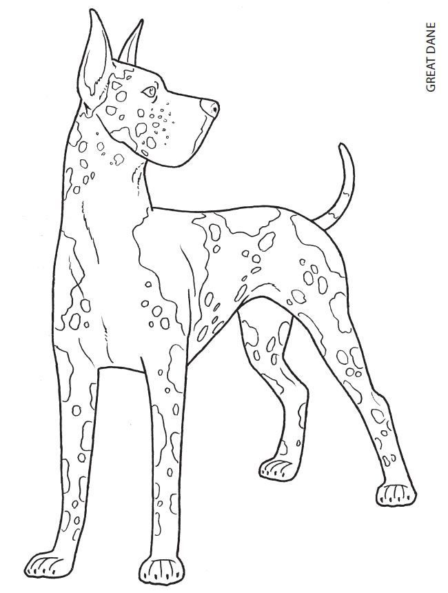 Great Dane Coloring Page Dog Coloring Page Animal Coloring Pages Coloring Pages