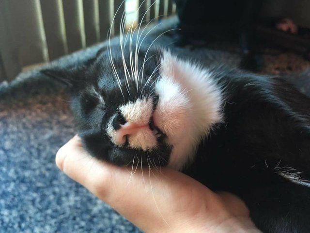 Rescue Kitten With No Eyes Won T Leave Her New Mom S Side I Really Can T Remember Feeling My Heart Falling In Love As Fast Kitten Kitten Rescue Foster Kittens