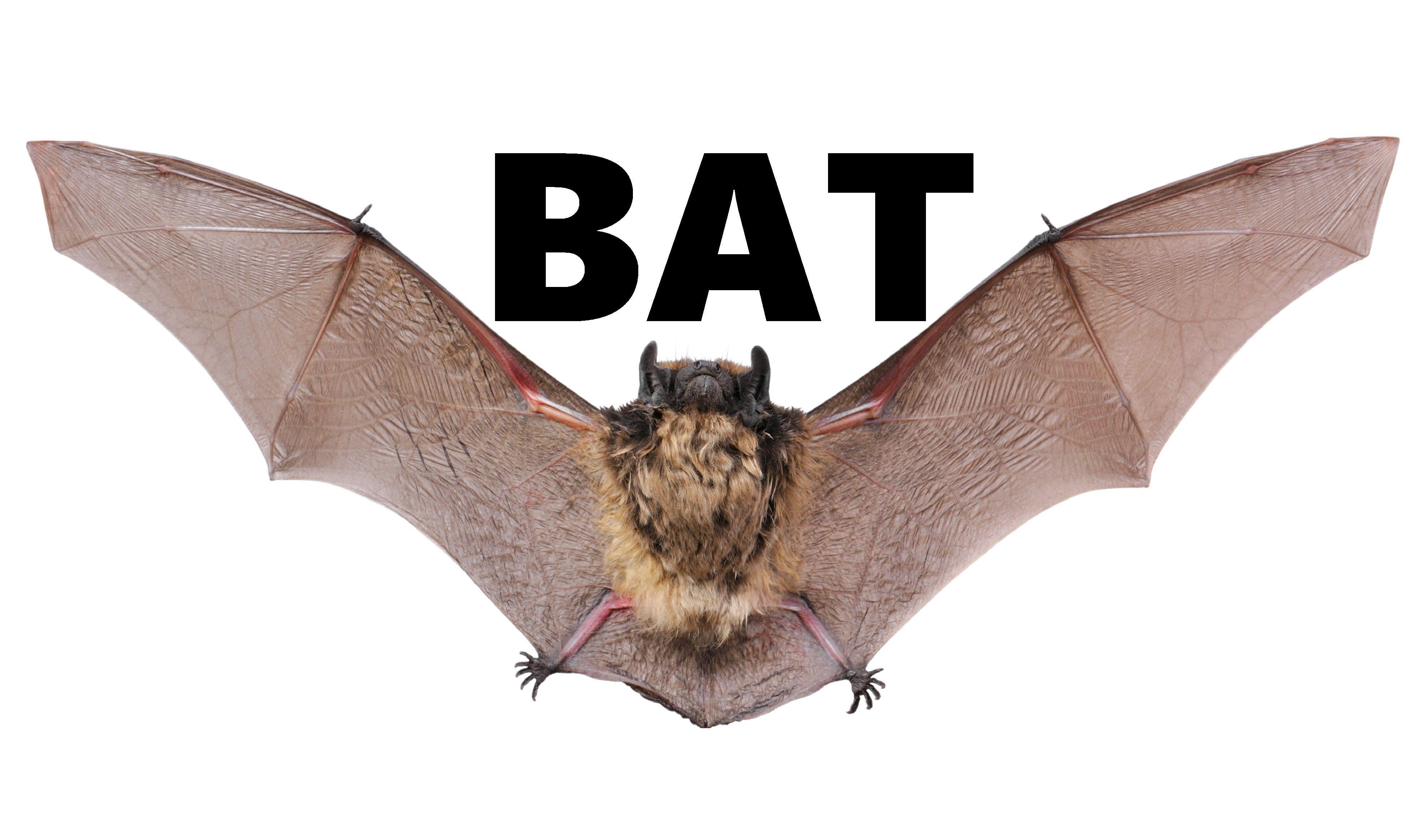 Bat Animals For Children Kids Videos Kindergarten Preschool Learning To Animals Youtube Animals Animals For Kids