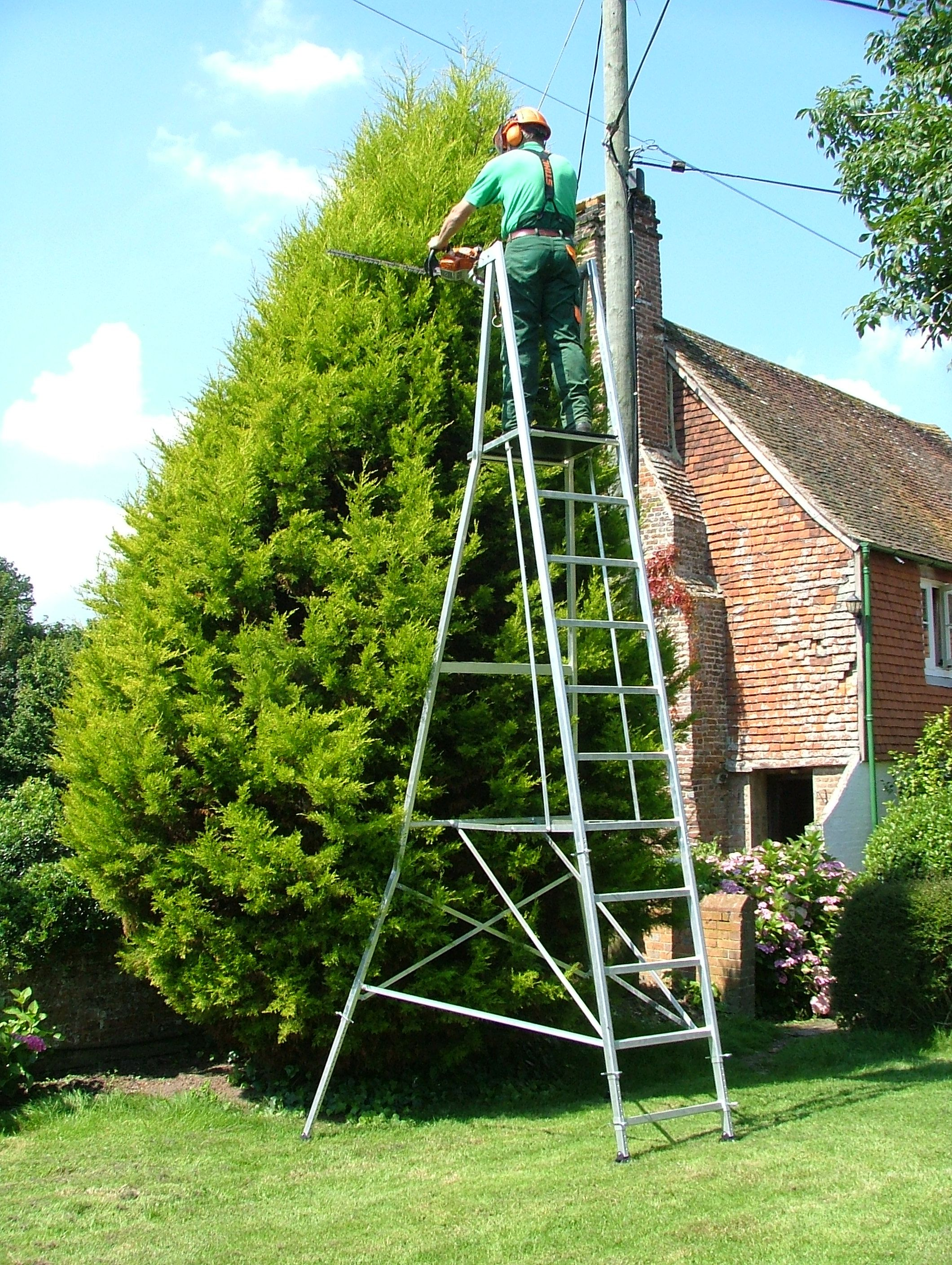 Tree Trimming Tree Pruning Services Georgia Tree Trimming Service Tree Pruning Tree Trimming