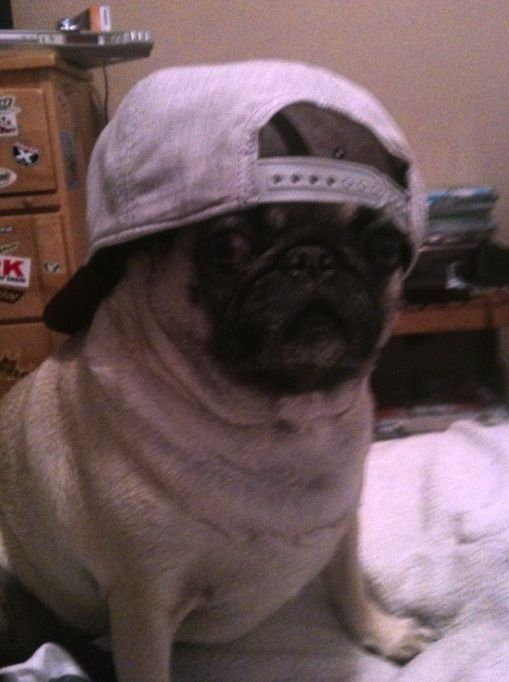 35 Most Adorable Moments In Pug History Pugs Cute Pugs Pugs