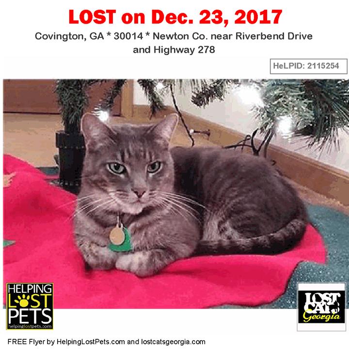 Lost Cat Covington GA. Dec. 23 2017 Closest