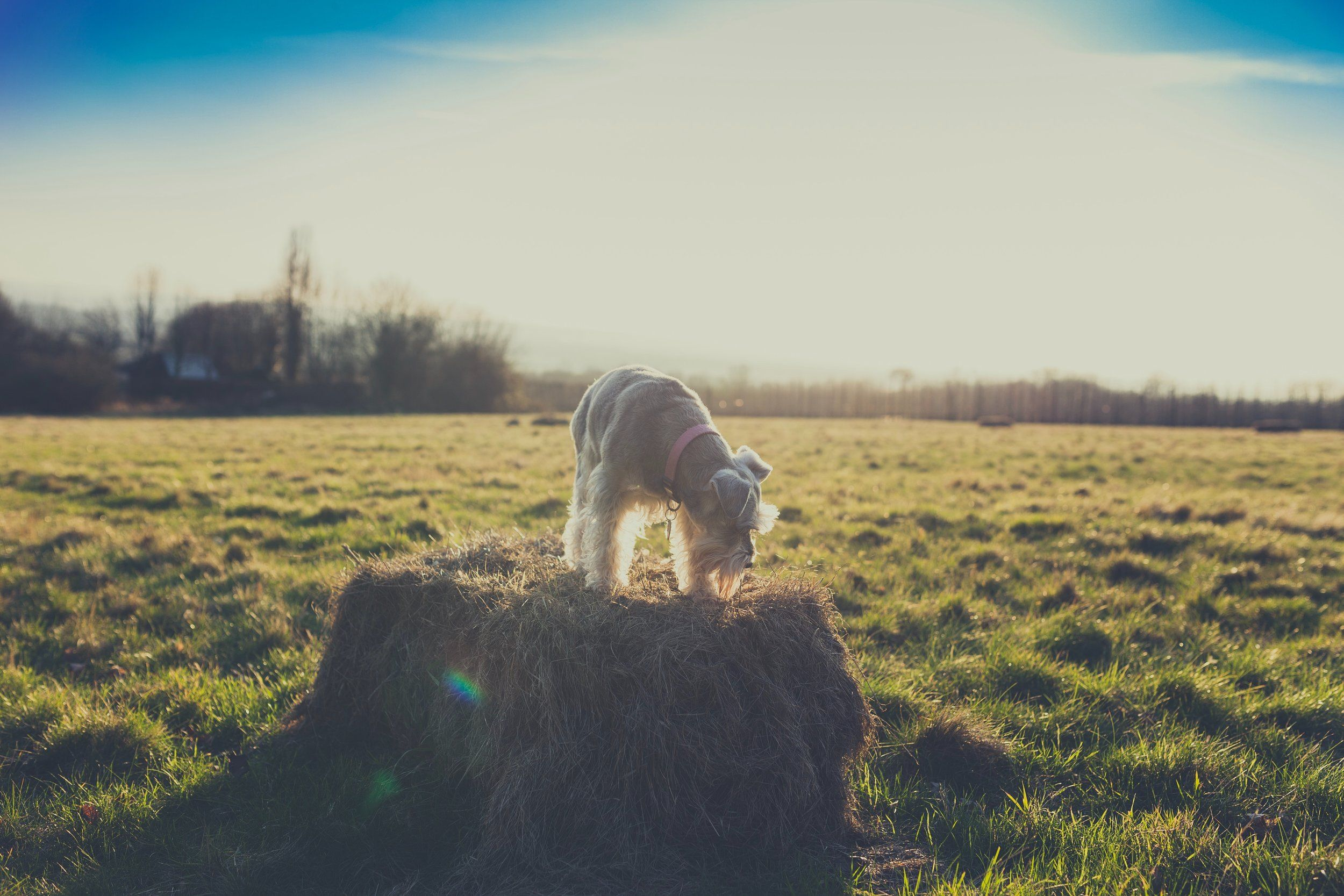 Is A Grain Freet Healthier For My Dog