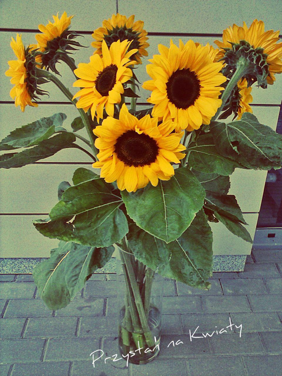 Gigant Sunflowers!