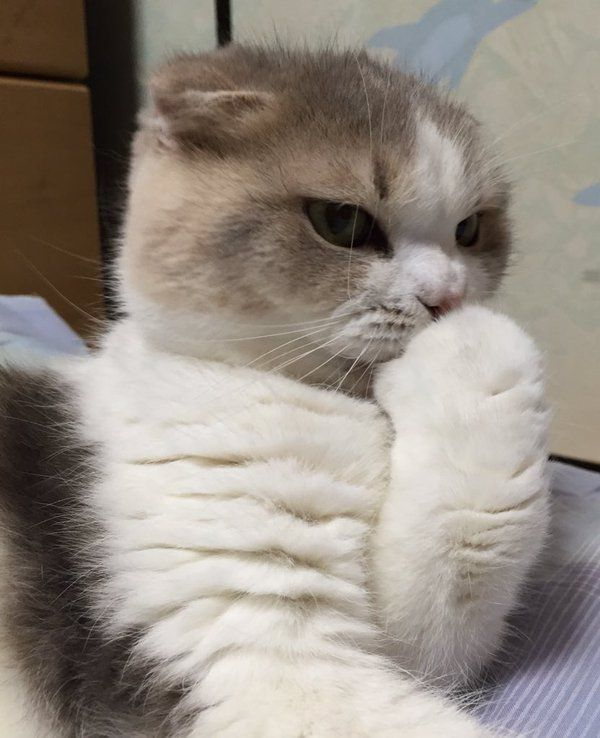 Login Or Sign Up Cute Cat Memes Cute Cats And Kittens Cats