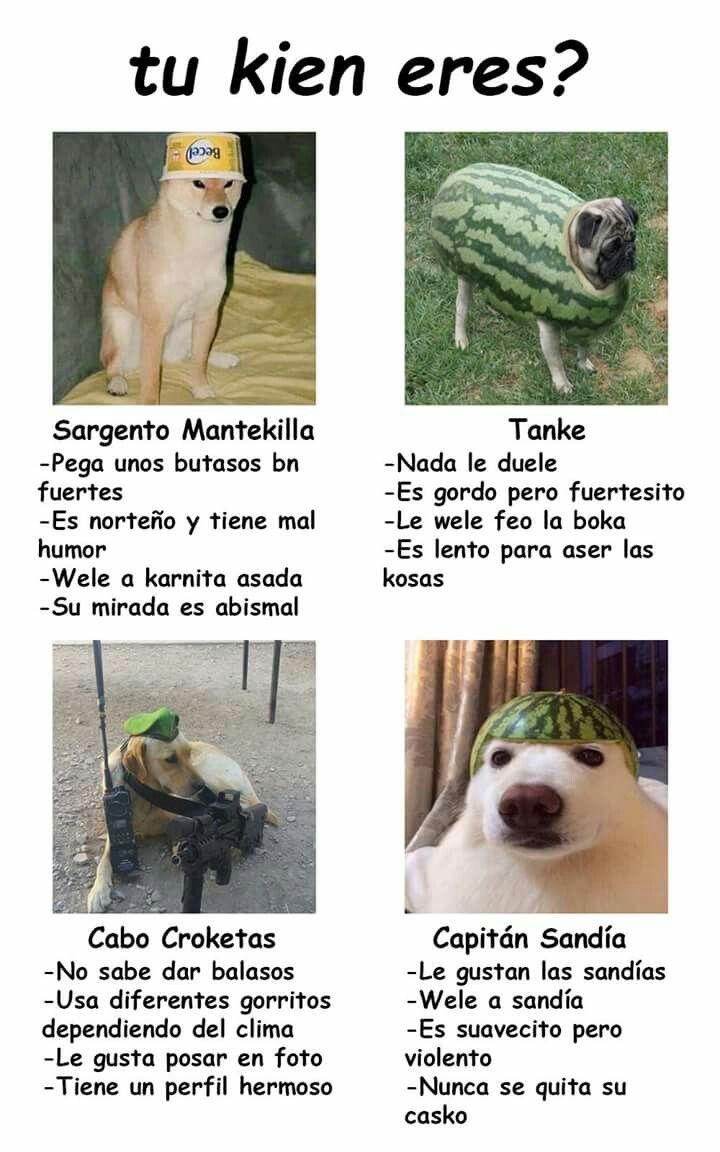 20 Graciosas Imagenes De Memes De Los Perros Mas Divertidos Memes Perros Memes De Perros Chistosos Memes Animales