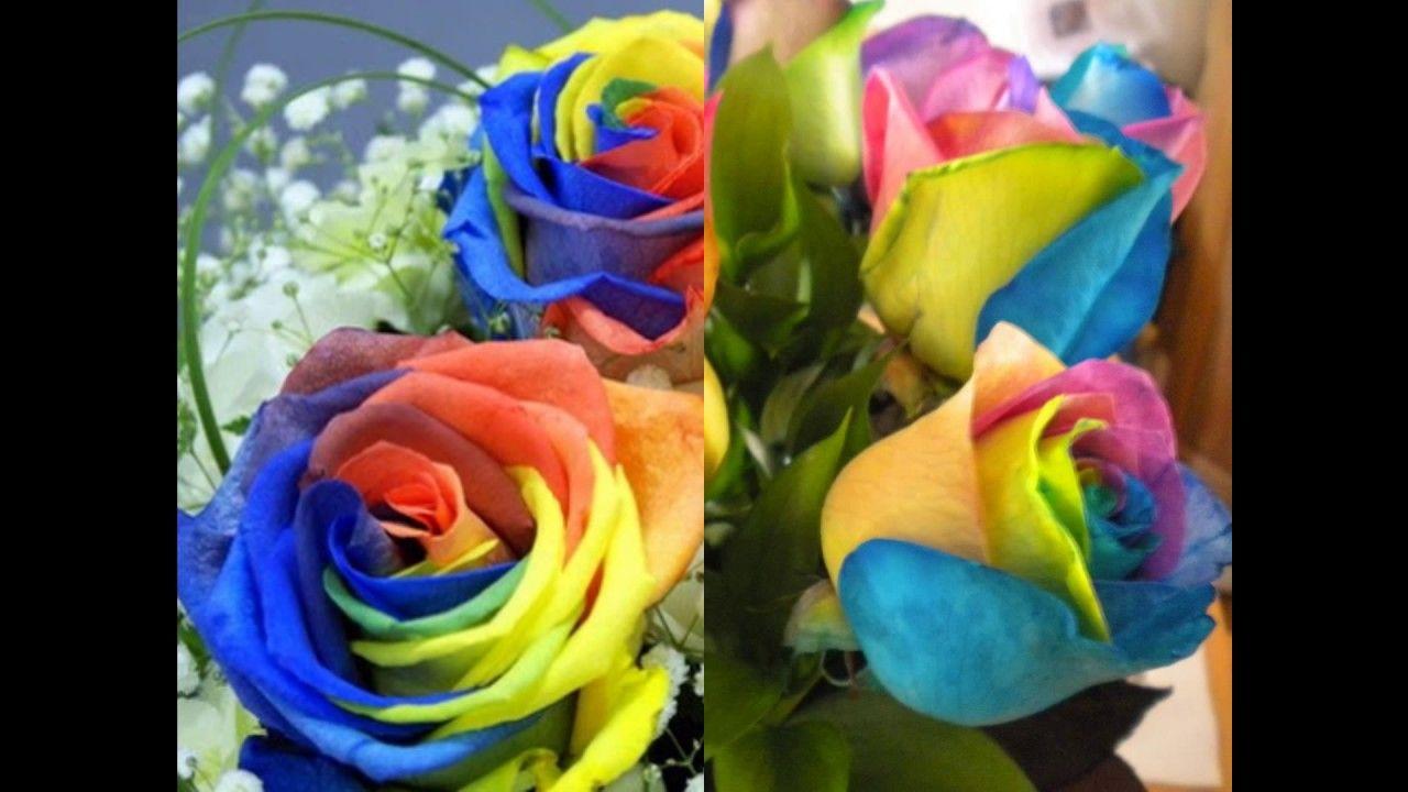 como ter flores lindas