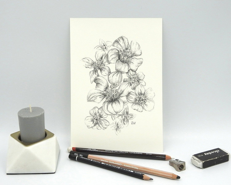 ORIGINAL Flower Pencil Drawing, Botanical Wall Art, Purple ...  Purple Saxifrage Drawing