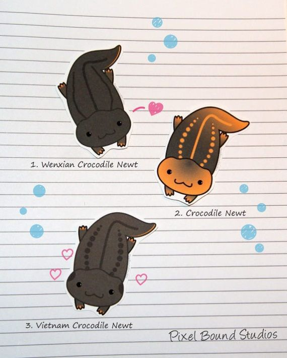 Crocodile/Knobby Newt Stickers And Magnets