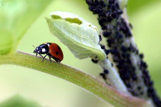 DIY // lady bug feeder