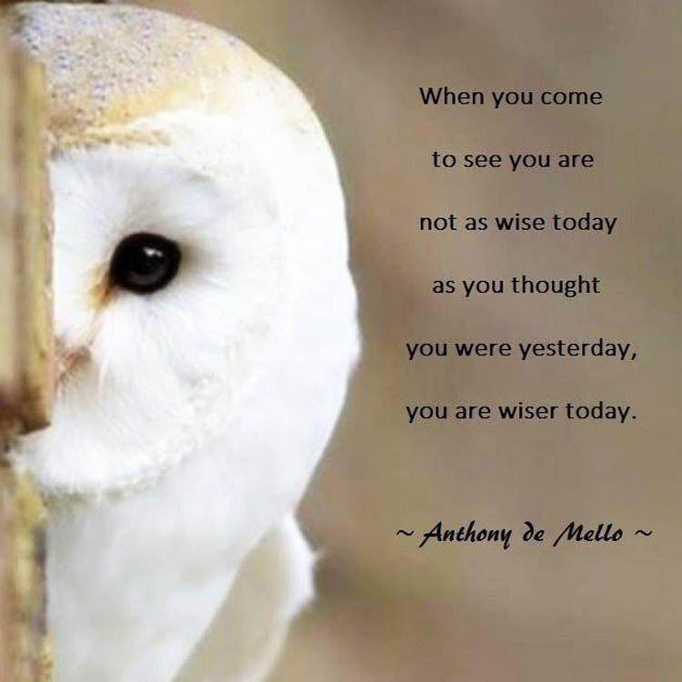 Wisdom Owl Wisdom Wisdom Quotes Wisdom Quotes Images