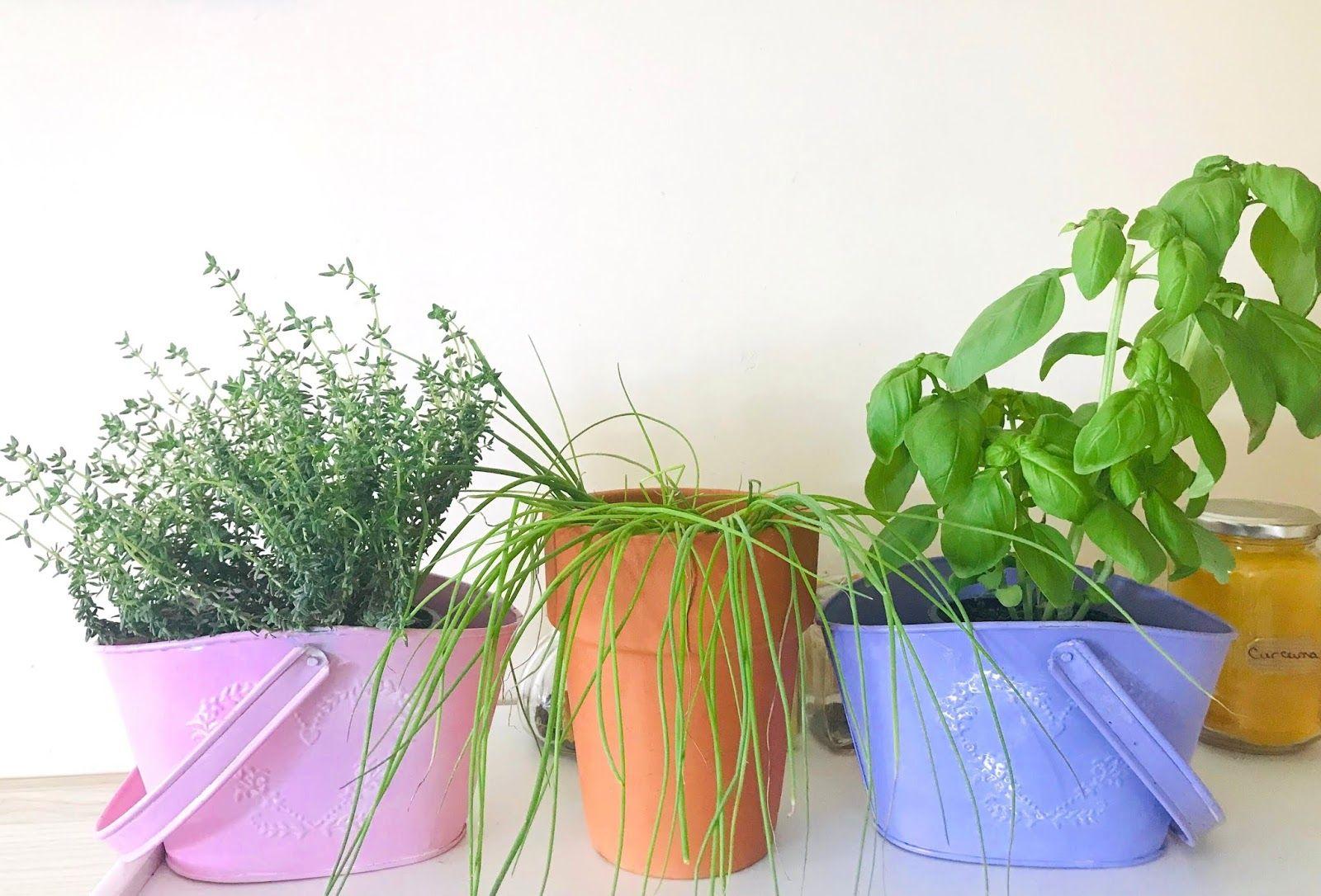 Bucket list 25 choses à faire au printemps Planter des