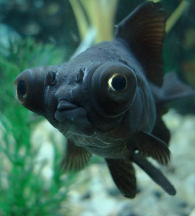 moore fish - Google Search  423a9f7ff6f