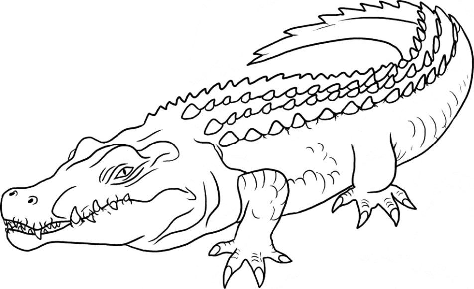 Crocodile Coloring Page Coloring Pages Animal Coloring Pages Saltwater Crocodile