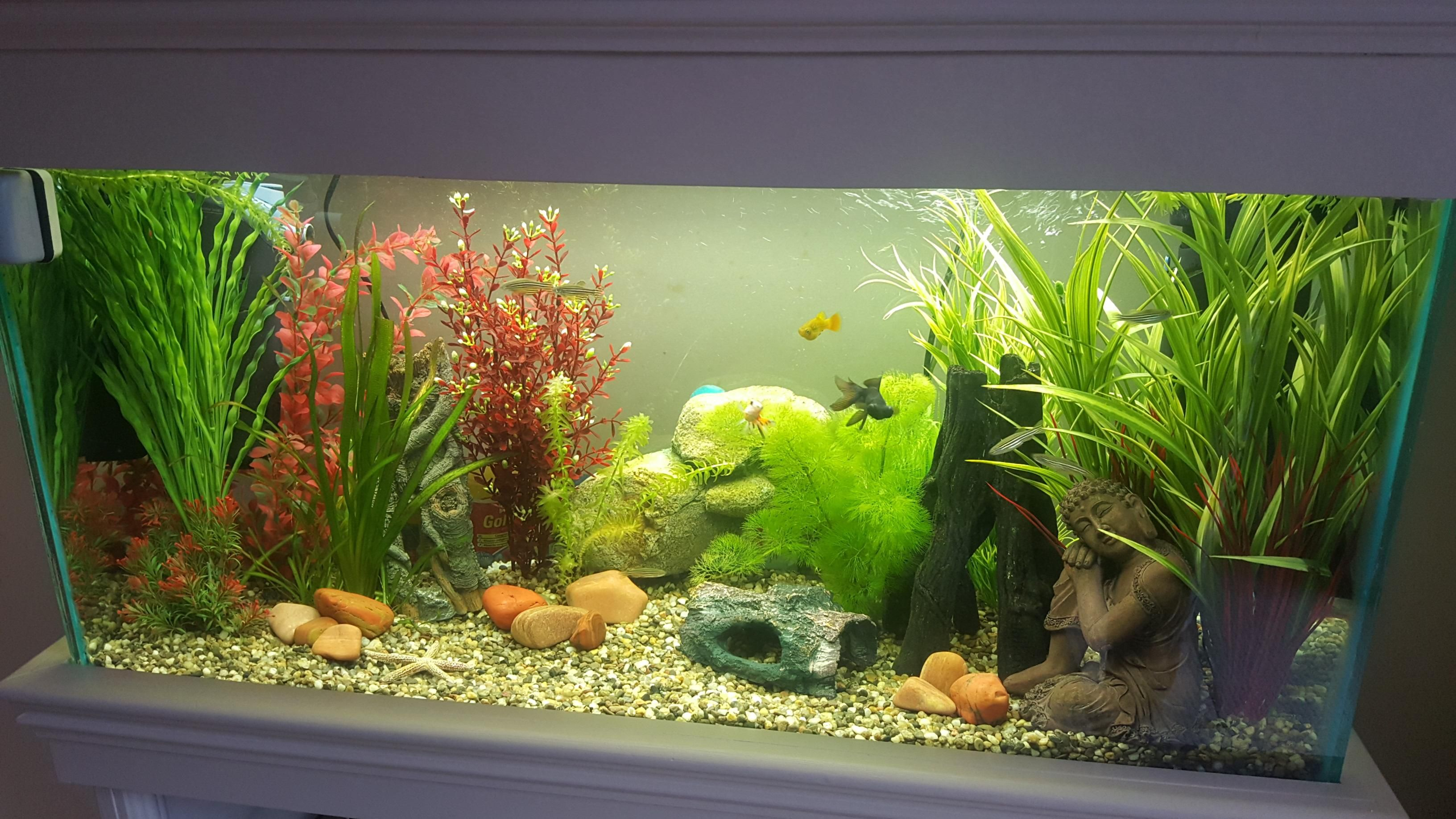 Fish for big aquarium - First Big Aquarium About 2 Months Old 11 Fish In Total Still Learning