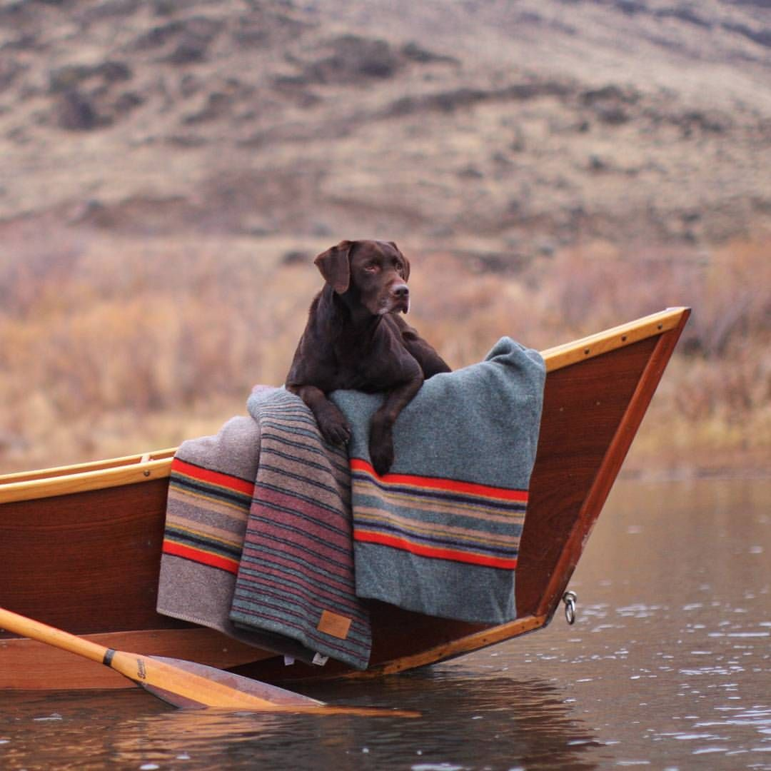 Always on the lookout. (Photo by @sethpatterson) #pendleton #dogsofinstagram #river #boats #blanket #adventure