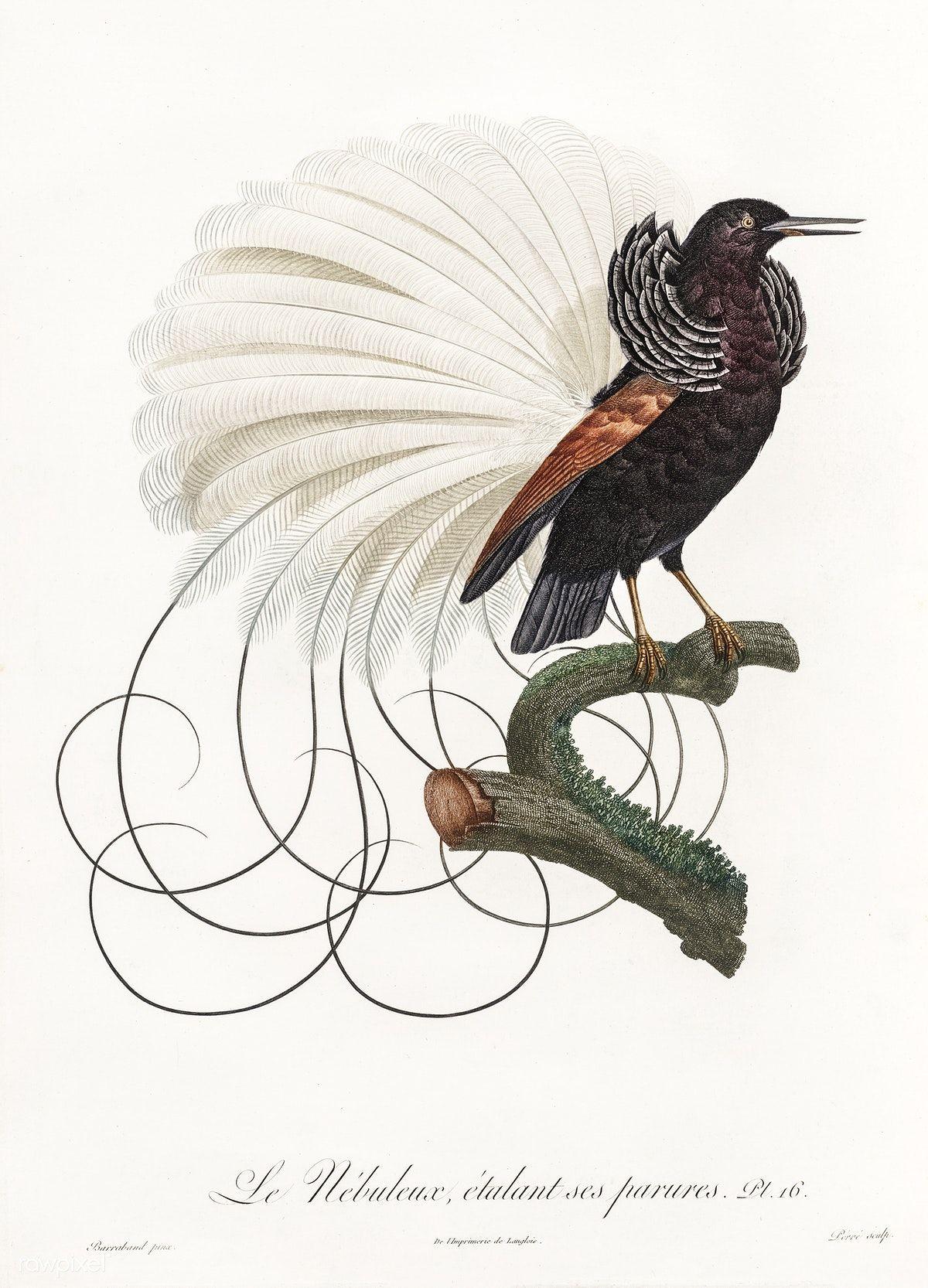 Free Public Domain | www.rawpixel.com | Twelve wired bird of ...
