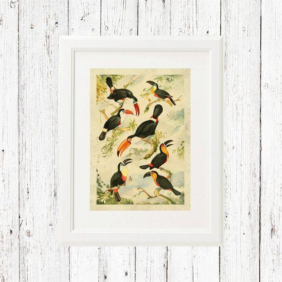 Tucanos printable wall art, exotic birds printable wall art ...