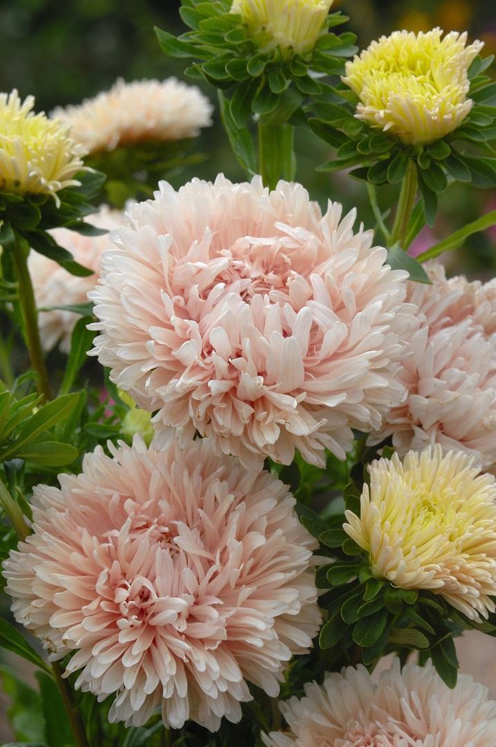 Pin by Tammy Dunlap on Flower Garden Flowers, Flower